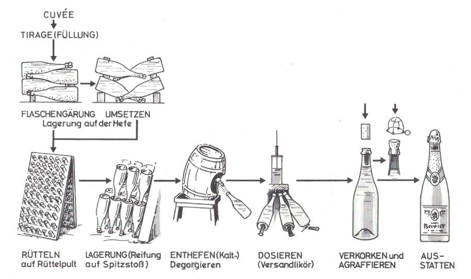 Schematische Darstellung der Sektherstellung nach der Methode der klassischen Flaschengärung.